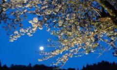 春夜 満月