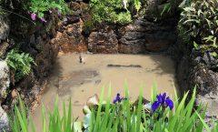 何十年ぶりの池の泥あげ