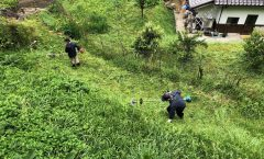 草刈りなど実施