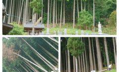 枯れ木の伐採